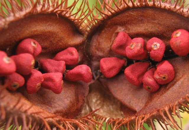 EFSA on Annatto