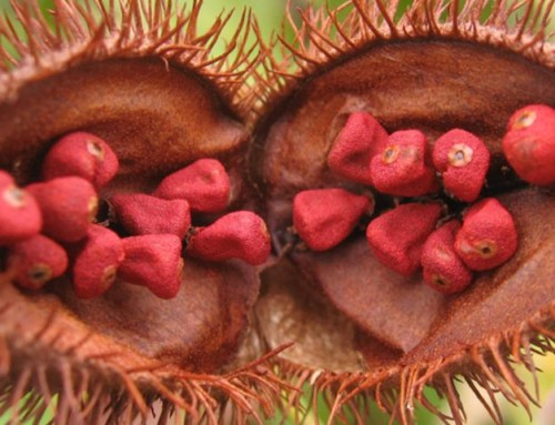 EFSA clarifies position for Annatto